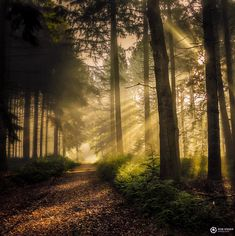 ***Sun lights up the path in the misty forest (Netherlands) by Rob Visser / 500px cr.