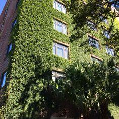 Vertical garden in New Orleans