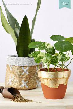 Easy DIY hessian plant holder and gold leaf terracotta pot by Temple  Webster stylist Emmaly Stewart