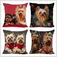 [Visit to Buy] Cute red background funny Yorkshire Terrier Pillow Cases 35 x 35 cm Excellent Quality Soft Pillowcase Yorkshire Terrier Puppies, Terrier Dogs, Pitbull Terrier, Boston Terrier, Yellow Lab Puppies, Bulldog Breeds, Yorkie Puppy, Chihuahua, Rottweiler Puppies