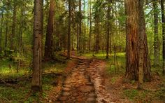 The wooden road