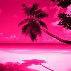Trendy Ideas For Palm Tree Wallpaper Iphone Neon Tree Wallpaper Iphone, Beach Wallpaper, Summer Wallpaper, Cool Wallpaper, Scenic Wallpaper, Pink Beach, Pink Summer, Photo Wall Collage, Picture Wall
