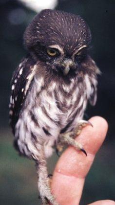 I am NOT tiny! (sniff) #OpticsOwl OpticsOwl.com