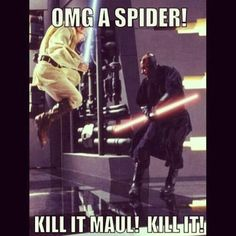 Omg a spider kill it mall **That'd be me lol***