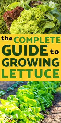 Growing Tomatoes From Seed Vegetable Gardening for Beginners: How to Grow Lettuce from Seed - Lettuce is a great, easy to grow crop for any area. Learn how to grow lettuce from seed in your own backyard vegetable garden or container garden! Vegetable Garden For Beginners, Backyard Vegetable Gardens, Container Gardening Vegetables, Gardening For Beginners, Gardening Tips, How To Plan A Vegetable Garden, Gardening Shoes, Gardens, Vegetables Garden