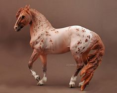 Love the crazy chestnut roan appy color!