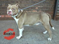 Very urgent....Rambo at BACC