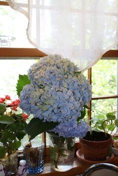 Baby Blue by joann.kunkle