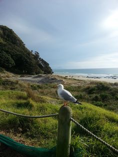 Early morning Mangawhai Heads Beach Early Morning, Cottages, Mountains, Beach, Nature, Travel, Animals, Cabins, Naturaleza