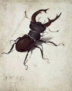 Albrecht Dürer - Stag Beetle