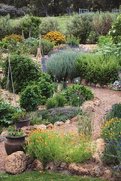 Edible garden 518688082086529926 - A sensory garden, at Whicher Ridge winery in WA's Geographe wine region. Source by surayashahid Gravel Garden, Water Garden, Australia Occidental, Sensory Garden, Natural Playground, Low Maintenance Garden, Edible Garden, Edible Plants, Gardens