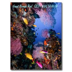 A postcard featuring schools of tropical fish and amazingly colored coral fans on Australia's Great Barrier Reef. #coral #reef #ocean #sea #diver #tropicalfish #greatbarrierreef #coralsea #coralreef #nature