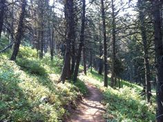 Chestnut Mountain Trail outside of Bozeman. Great place to mountain bike or trail run. | LivingBozeman.com