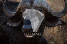 Cabeça de búfalo/Buffalo head by Dina – Moderimage