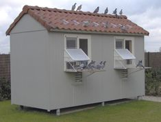 Pigeon Loft Design, Homing Pigeons, Pigeon Bird, Palomar, Shed, Backyard, Birds, Outdoor Structures, Lofts