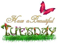 Have a beautiful Tuesday butterfly days days of the week weekdays tuesday tuesday greeting beautiful tuesday