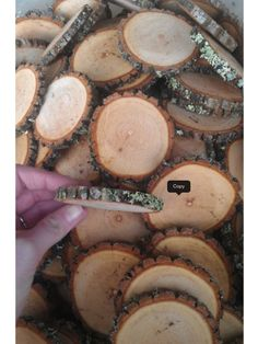 """Amazon.com: 50 2-3"""" Sourwood Tree Log Disc Wood Slices Branch Button Coaster Rustic Wedding Christmas Ornament: Wedding Ceremony Accessories: Home & Kitchen"""