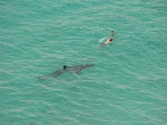 Photo of Sharks near Swimmers | Shark Encounters – Close Calls with Sharks – Pics & Video
