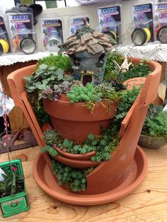 Fairy garden in a broken pot.....cute...