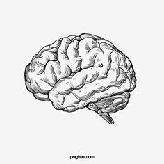 Sketch The Human Brain Sketch Vector Human Vector Brain Vector Human Brain Drawing Cerebrum Sketch The Human Brain People Drawing Brain Drawing Simple, Human Brain Drawing, The Human Brain, Brain Vector, Human Vector, Arte Com Grey's Anatomy, Anatomy Art, Body Sketches, Dope Art