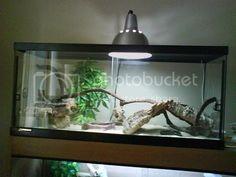 Ultimate Leopard Gecko anti-impaction Solution! | Reptile Forums Lizard Habitat, Rock Background, Fake Rock, Habitats, Benefit