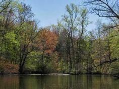 Freshwater Fishing Basics
