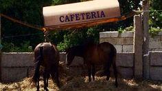 «Cabalos de chiquiteo á sombriña en Castrelo, no concello de Cambados». Tomadas en xullo deste ano á carón na estrada nacional.