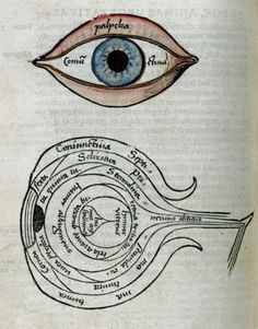 Two woodcuts, one handcoloured Plate taken from the book of Psychology part of the Margarita Philosophica by Gregor Reisch First printed in Medical Art, Medical Science, Medical History, Pseudo Science, Science Art, Eye Illustration, Good To See You, Vintage Medical, Eye Art