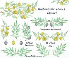 Watercolor Olives Clipart PNG Olive branch by PassionPNGcreation