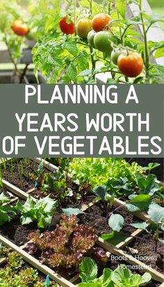 veggie garden Planning out a years worth of vegetables to feed your family. Gardening and growing food to feed your family. How to create a home vegetable garden. Diy Gardening, Organic Gardening Tips, Gardening For Beginners, Gardening Zones, Gardening Courses, Hydroponic Gardening, Gardening Websites, Organic Compost, Vegetables Garden
