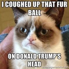 I coughed up that fur ball on Donald Trump's head.