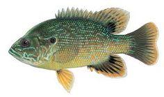 rotton rod fishhing - Hľadať Googlom