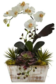 Orchid Arrangements 38