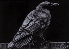 Sandrine Curtiss Art Limited Edition PRINT ACEO RAVEN crow black bird Halloween colored pencil drawing painting