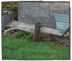 Groundhog Photo by Taz Southern Illinois USA