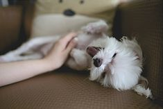 Cat Training Biting Puppy Biting Training: You Are Doing it Wrong! - Good Doggies Online - Puppy biting training needs to start early. Check out these 5 simple steps to get you started right. Pet Shop Online, Education Canine, Puppy Biting, Oils For Dogs, Pet Friendly Hotels, Malteser, Training Your Dog, Training Tips, Dog Training