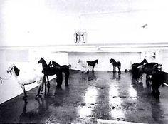 Jannis Kounellis - Untitled / 12 Live Horses, Rome (1969)