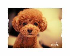 nicoleさんの投稿写真「My sweet」の詳細ページです♥