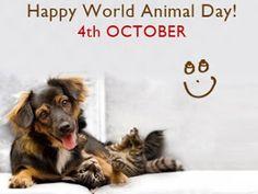 παγκόσμια ημέρα των ζώων...