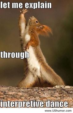 The Interpretive Dance Squirrel . The Interpretive Dance Squirrel Are we still doing more of what makes us happy? Funny Animal Memes, Funny Animal Pictures, Funny Animals, Cute Animals, Funny Memes, Memes Humor, Funny Dance Memes, Baby Animals, Funniest Memes