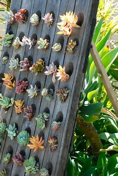 On the patio: You can plant succulents or small plants into the deep, angled slots of a riddling rack, like this one we spotted from This American Home.