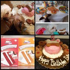#puppycake #cakeforpuppies #cakesfordogs #dogtreats #dogbirthdays #dogtreats