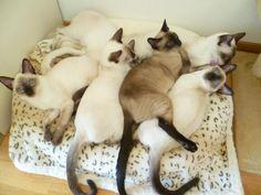 Kitty pile!                                     https://www.facebook.com/photo.php?fbid=421809224692632