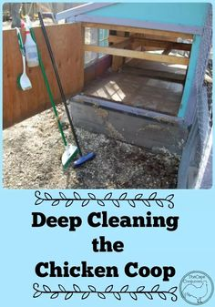 Deep Cleaning the Chicken Coop Easy Chicken Coop, Portable Chicken Coop, Chicken Coop Designs, Chicken Coop Plans, Building A Chicken Coop, Chicken Feed, Chicken Runs, Chicken Shack, Chicken Life