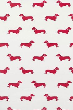 Red Dachshund Wallpaper at Emily Bond UK