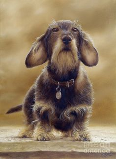 Wire Haired Dachshund Painting