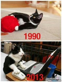 Gato historia