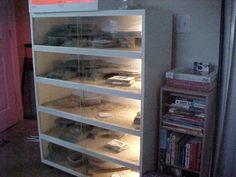 this would be a great setup for a small scale leopard gecko breeder. Or even just to house a few males in their own tanks.