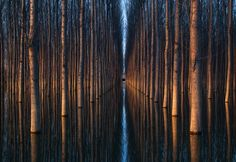 Trees \\ Optical Illusion Photography by Oliver Delgado
