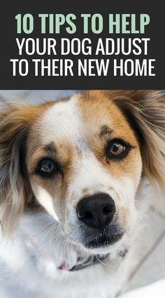 10 Ways to Help Your Dog Adjust to a New Home.